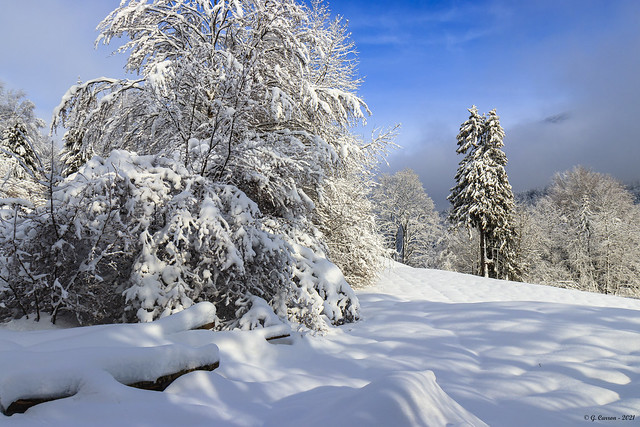 Saison du blanc.... ( Savoie 01/2021)