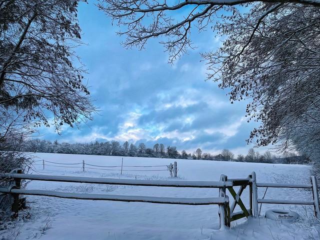 Winterweide im Taunus