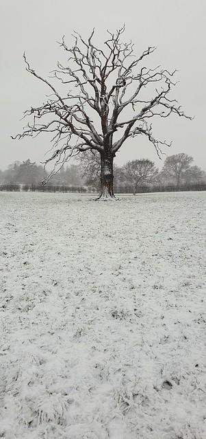 024/365/2021 Tree
