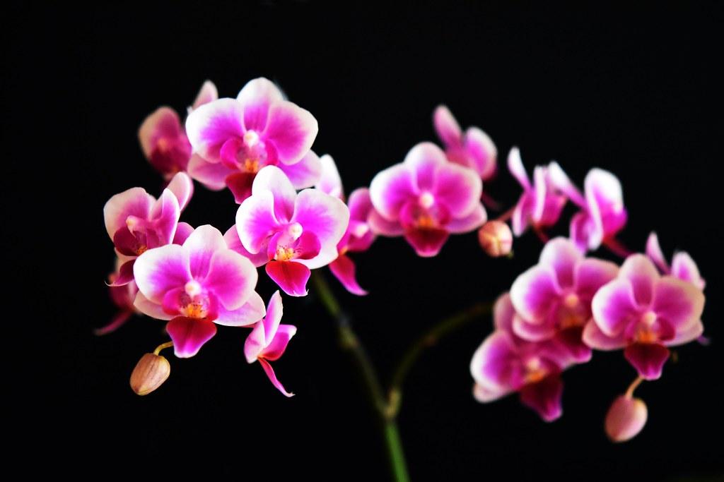 Orchideenblüten 14