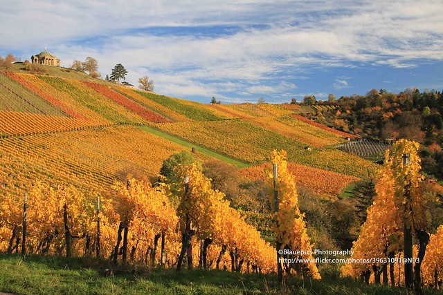 Untertürkheim, Rotenberg, vineyards in Autumn colours