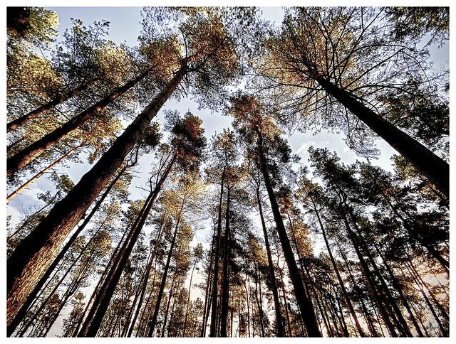 144 Tall Trees