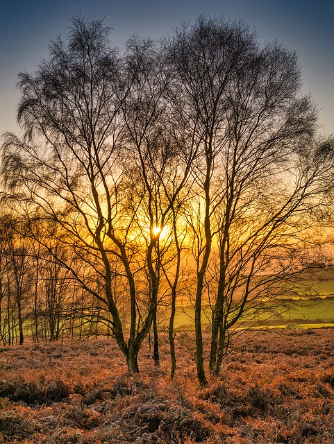 backlit trees - birchen edge