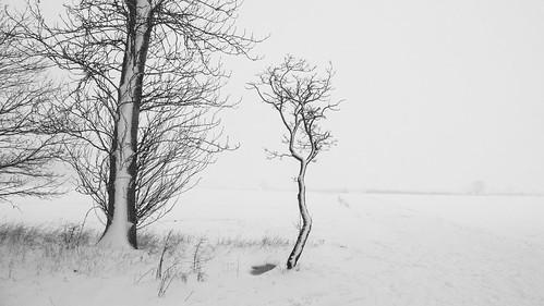loughborough winter landscape charnwood field leicestershire tree blackandwhite monochrome snow tranquil baretree minimal