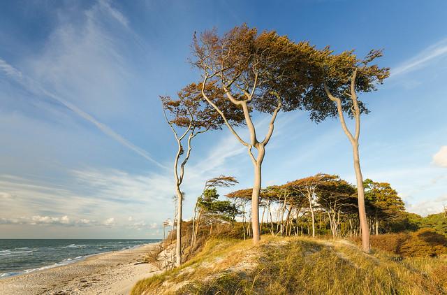 Windflüchter on West Beach