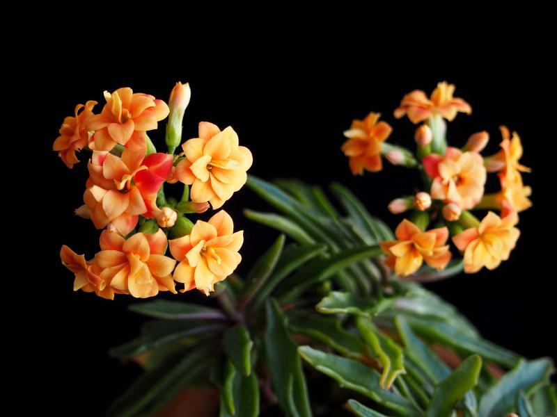 Les succulentes chez Cloo en 2021 50871126172_7922ebd814_c