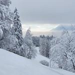 Skitour Hinwil-Bachtel Jan 21'