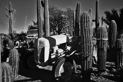 Cactus Farming