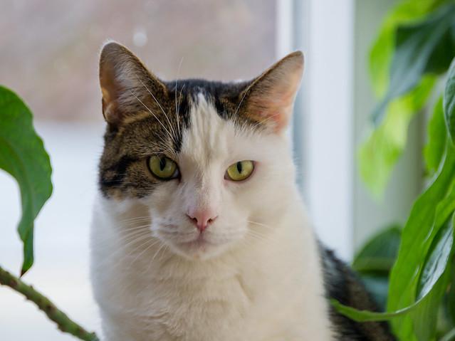 Cat  (portrait)