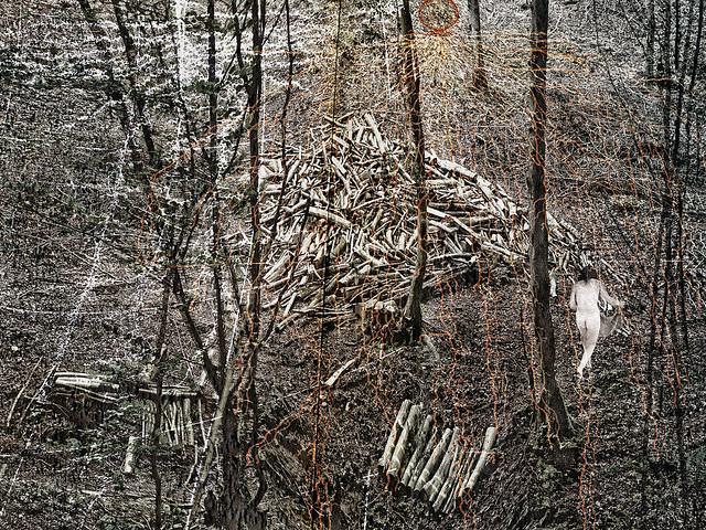 roots and rhizomes
