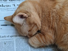 News hound? No, news cat