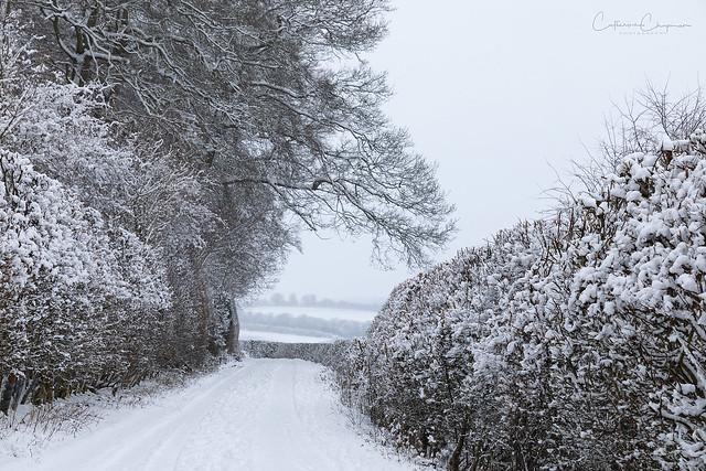 A winter wonderland in The Chiltern Hills