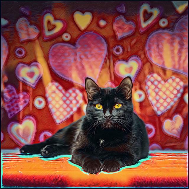 Passion Cat