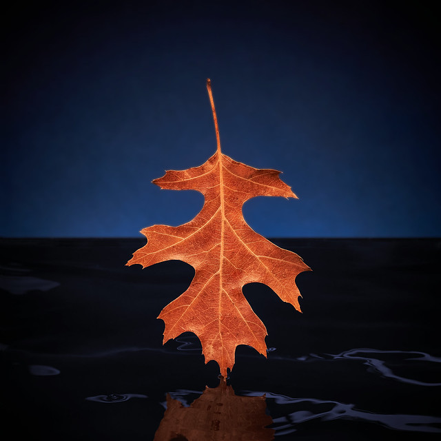 Leaf falling in water