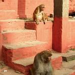 Macaques at Durbar Square, Kathmandu