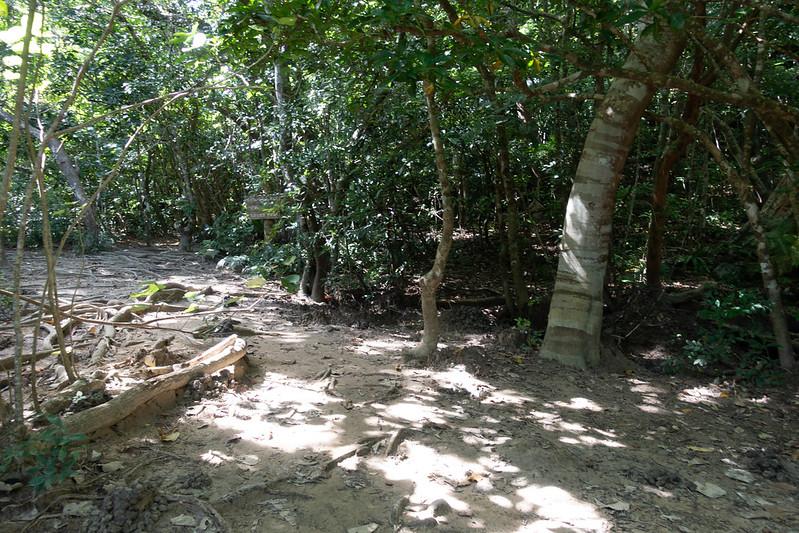 ピナイサーラの滝 トレッキング