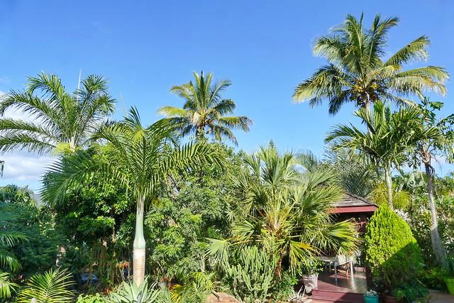 Au jardin, dans la palmeraie