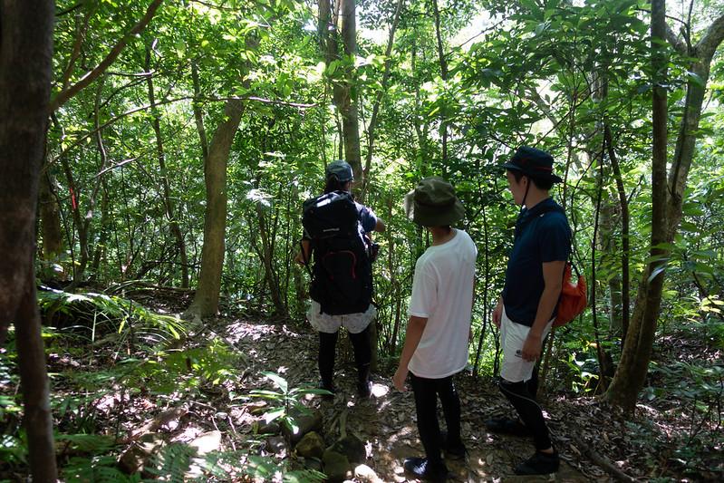 西表島の自然