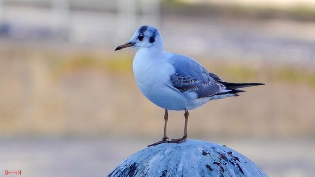 Bird - 9344