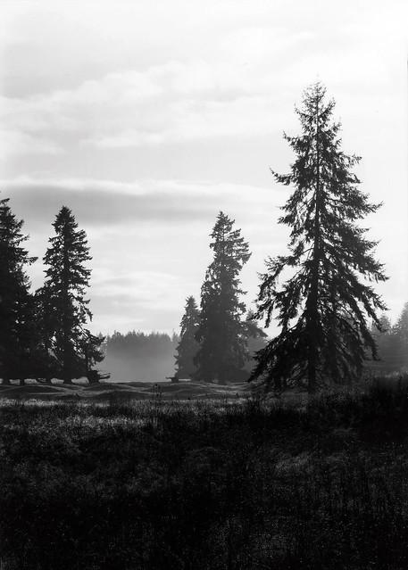 Trees & Fog - Washington