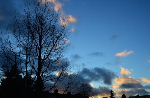 germany munich deutschland münchen bayern bavaria amhart morning clouds wolken sky himmel blue blau tree baum silhouette early früh nature natur ©allrightsreserved