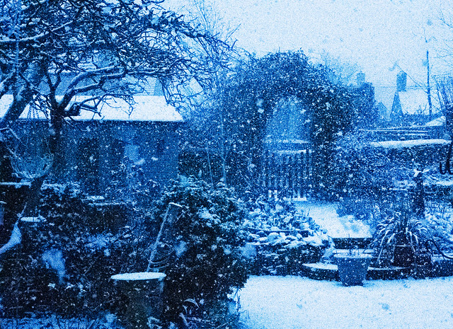 The garden in the snow #25
