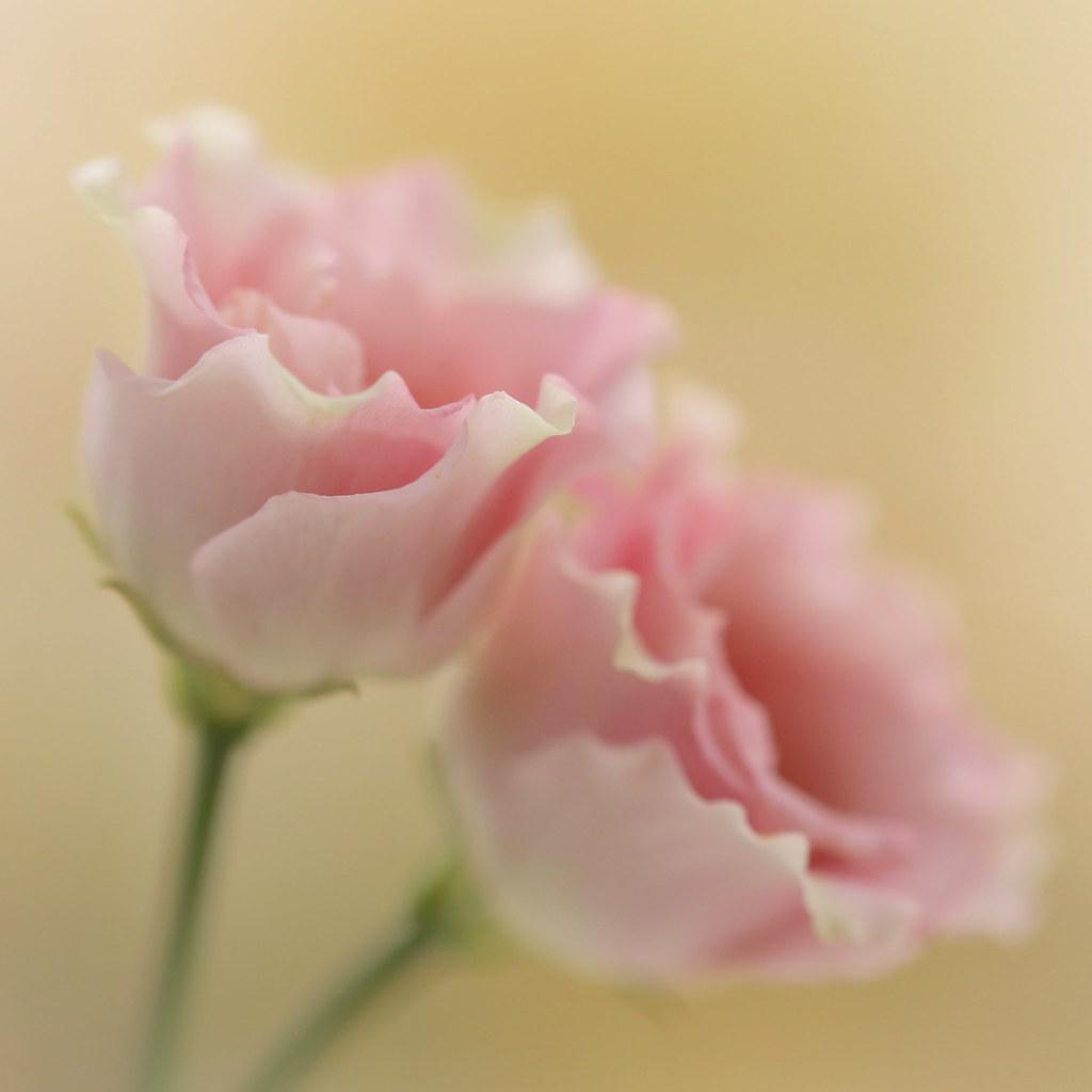 Flower Duet - Lockdown Song