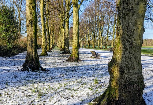 Snow by the trees at Halsam Park, Preston | by Tony Worrall