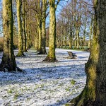 Snow by the trees at Halsam Park, Preston