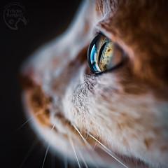 Nero's Eye