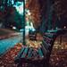 tomageorgian40 posted a photo:Print Photography Bench Autumn Park