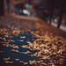 tomageorgian40 posted a photo:Print Photography Leaf Autumn