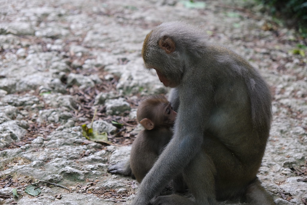 一、10母猴摟著小猴2