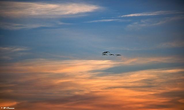 Ibis going home