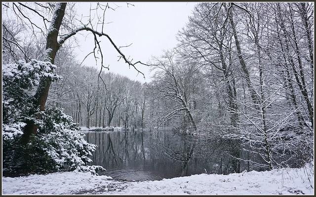 🌲⛄️💫🎄✨🎄💫⛄️🌲 Wintermoment ...