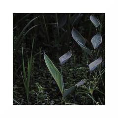 en-clave vegetal  (由  2014paf