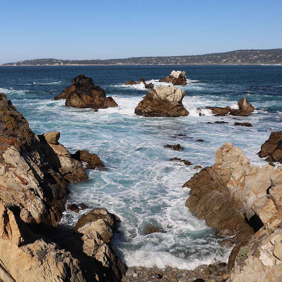 jewels-in-coves-point-lobos
