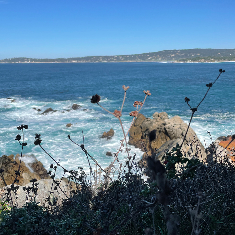goodbye-point-lobos