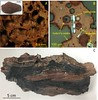 The newly named mineral, xuite, is shown here magnified in images A and B, and the lower image is a sample from Gillette, Wyoming. The reddish area contains the xuite, hematite, and silica-rich glass.