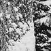 Snow - 4