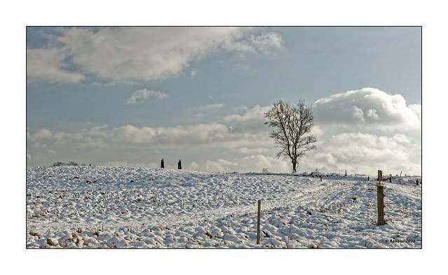 MAASDUINEN...winterlich...