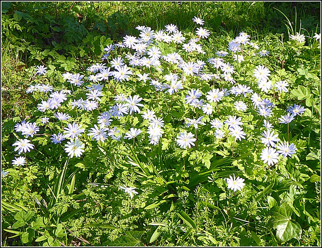 Hedgerow  Flowers ...