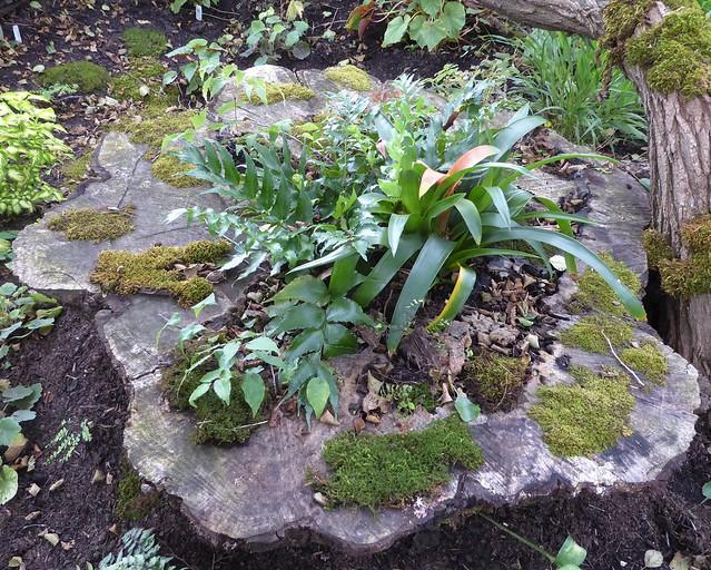 Wheaton, IL, Cantigny Park, Stump Mini-Garden