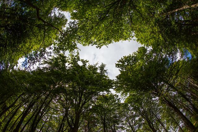 Look Up, Scotland