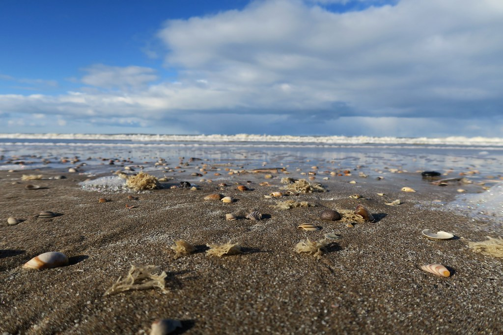 Strandwandeling. Zeebanket.
