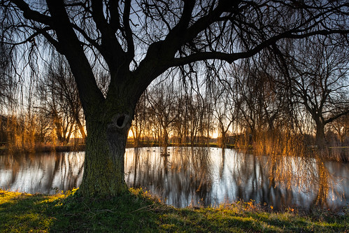 essex southend sunrise lake tree folage grass reflection