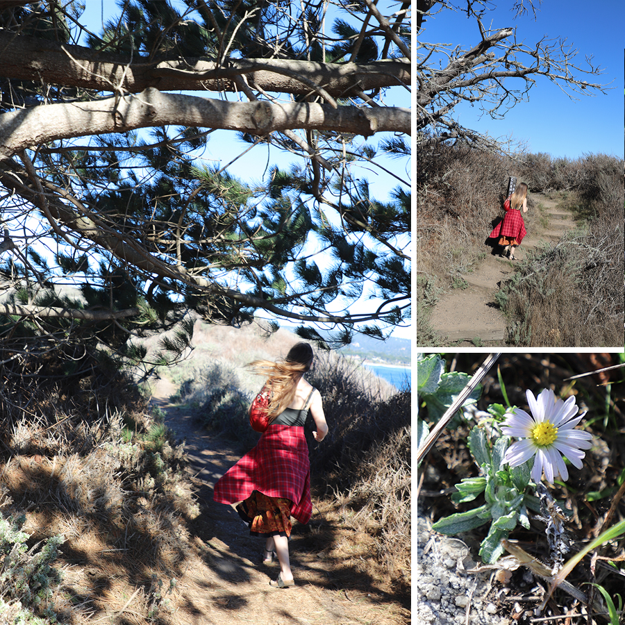 walking-the-trails-of-point-lobos