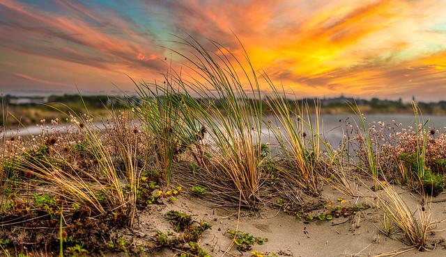 Sea Grass at Sunset