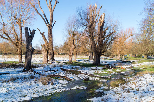 Bushy Park in Snow 1