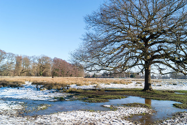 Bushy Park in Snow 2